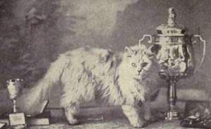 Champion Persian Cat in late 19th Century England