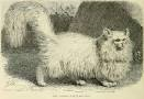 picture-early-persian-cat